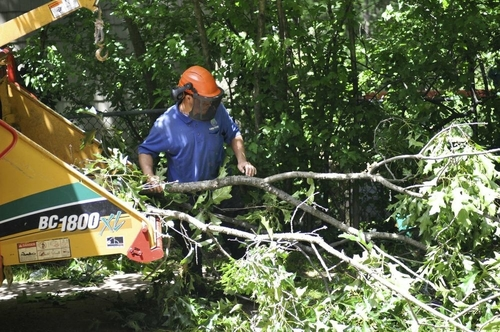 Picture of an employee with safety gear on inserting a tree limb into the wood chipper in Green Bay, WI
